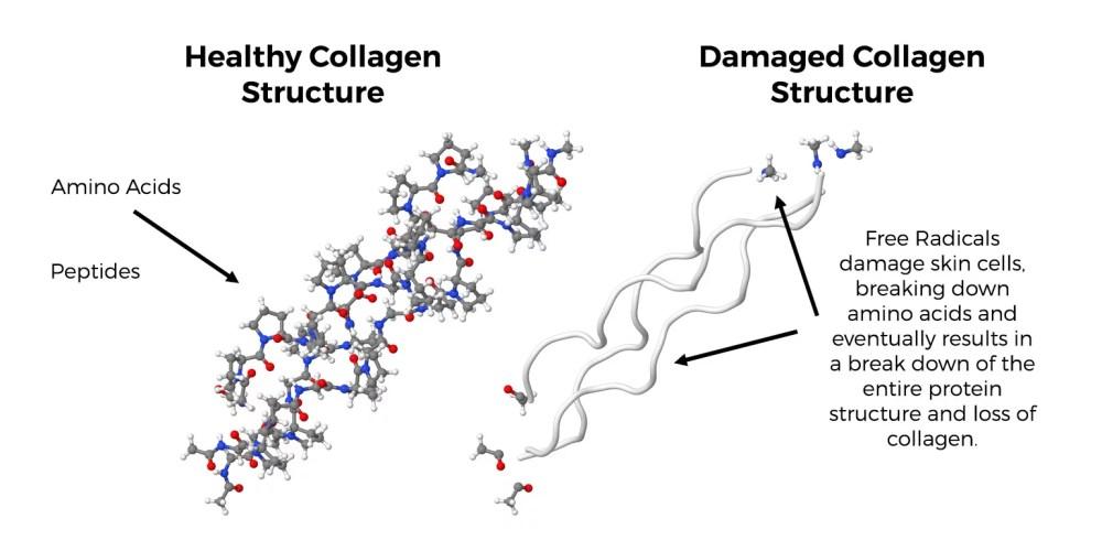 medium resolution of collagen protein strand