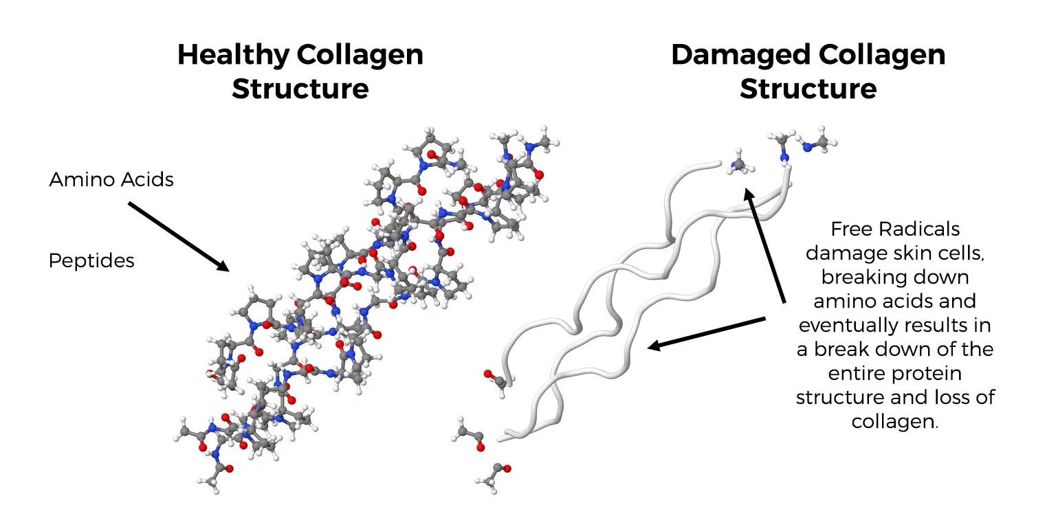 hight resolution of collagen protein strand