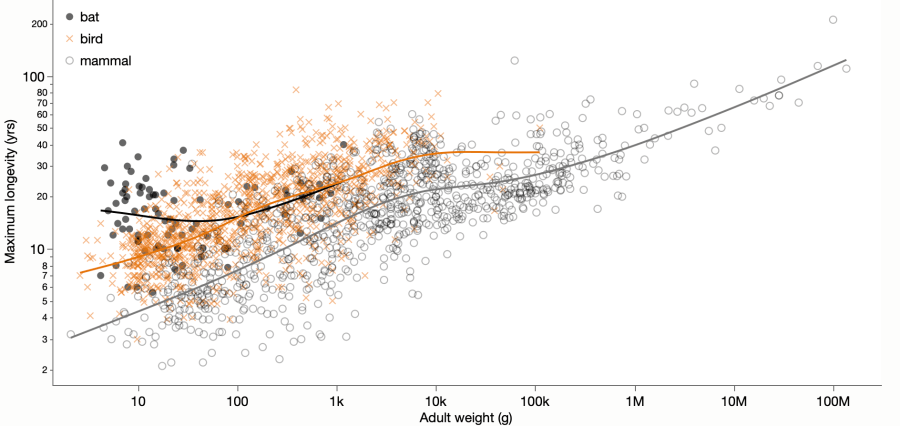 Scatterplot showing lifespan versus adult weight for mammal and bird species.