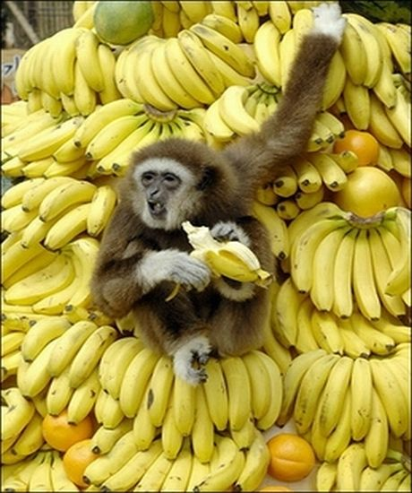 are-bananas-dangerous