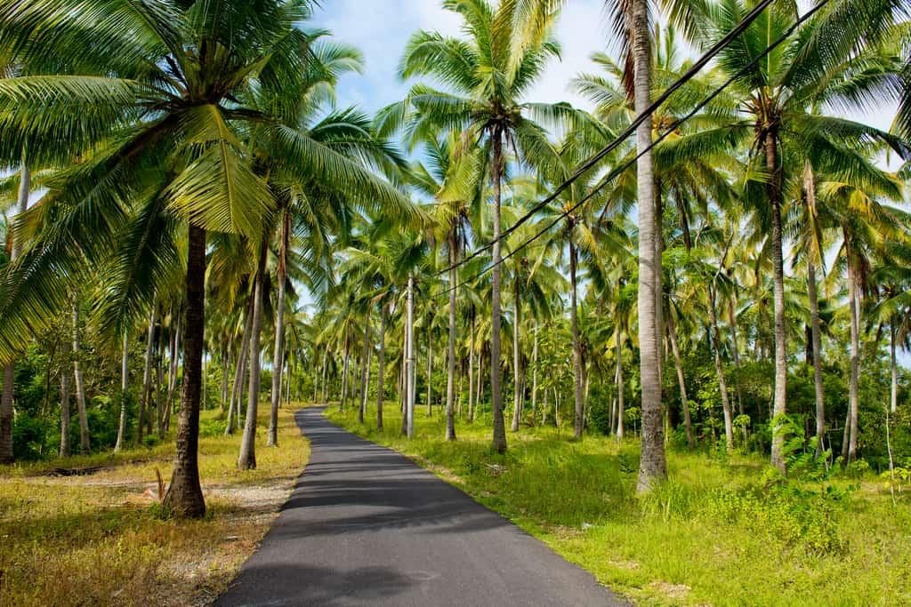 Roads in Nusa Penida