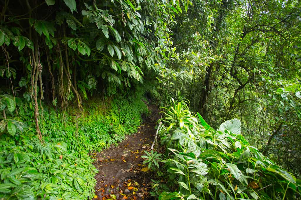 path to banyumala twin waterfall