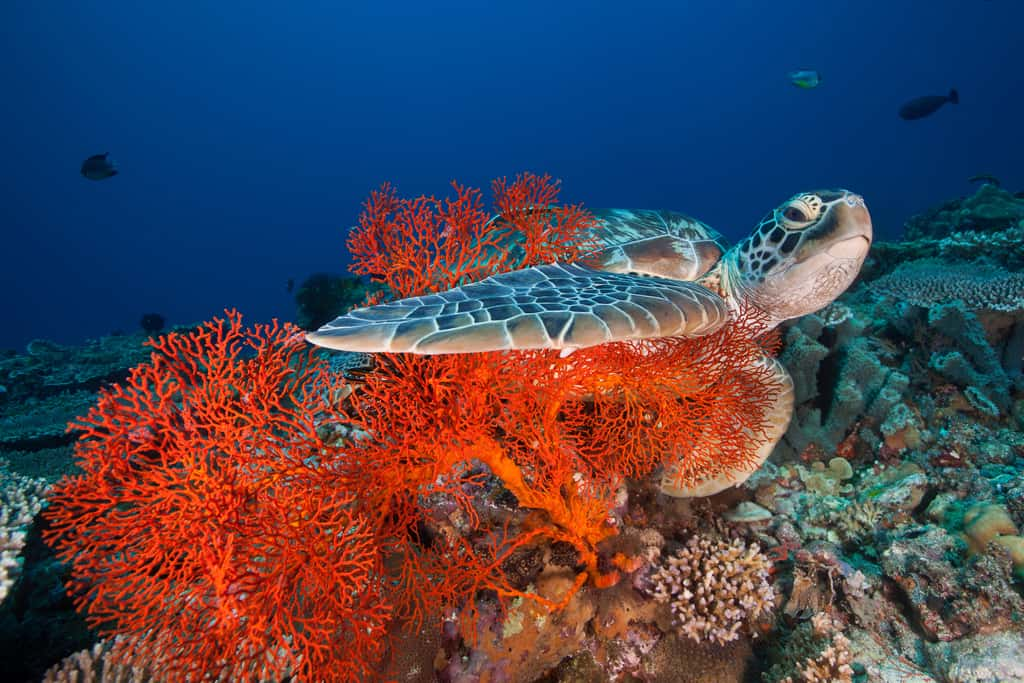 gili islands coral reef