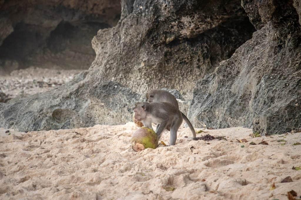 Green Bowl Beach monkeys
