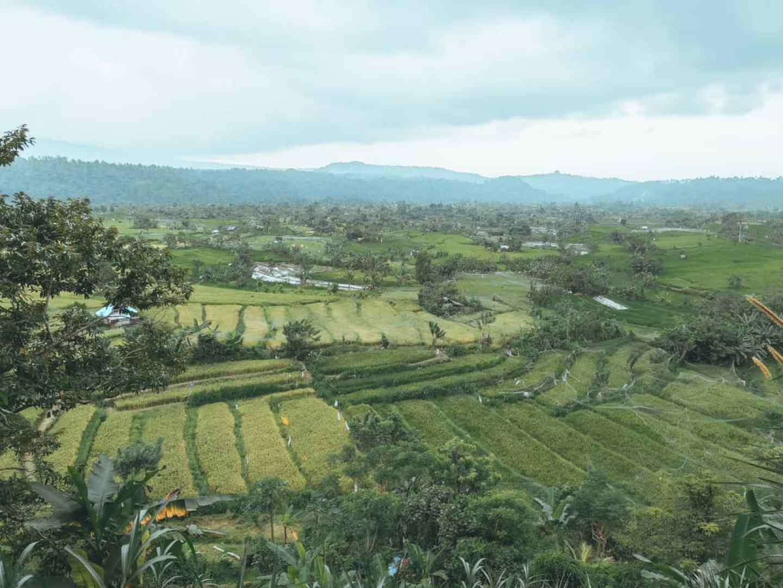 Sidemen Rice Terraces