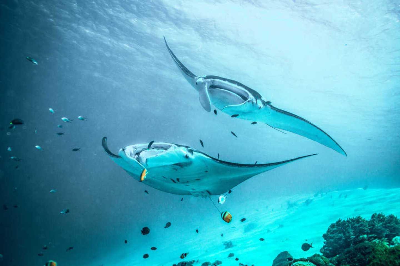 manta ray nusa lembongan