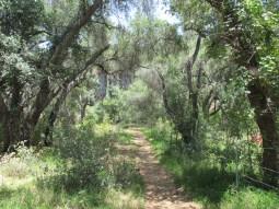 Lake Hodges trail