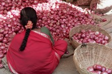 Sorting red onions in the market