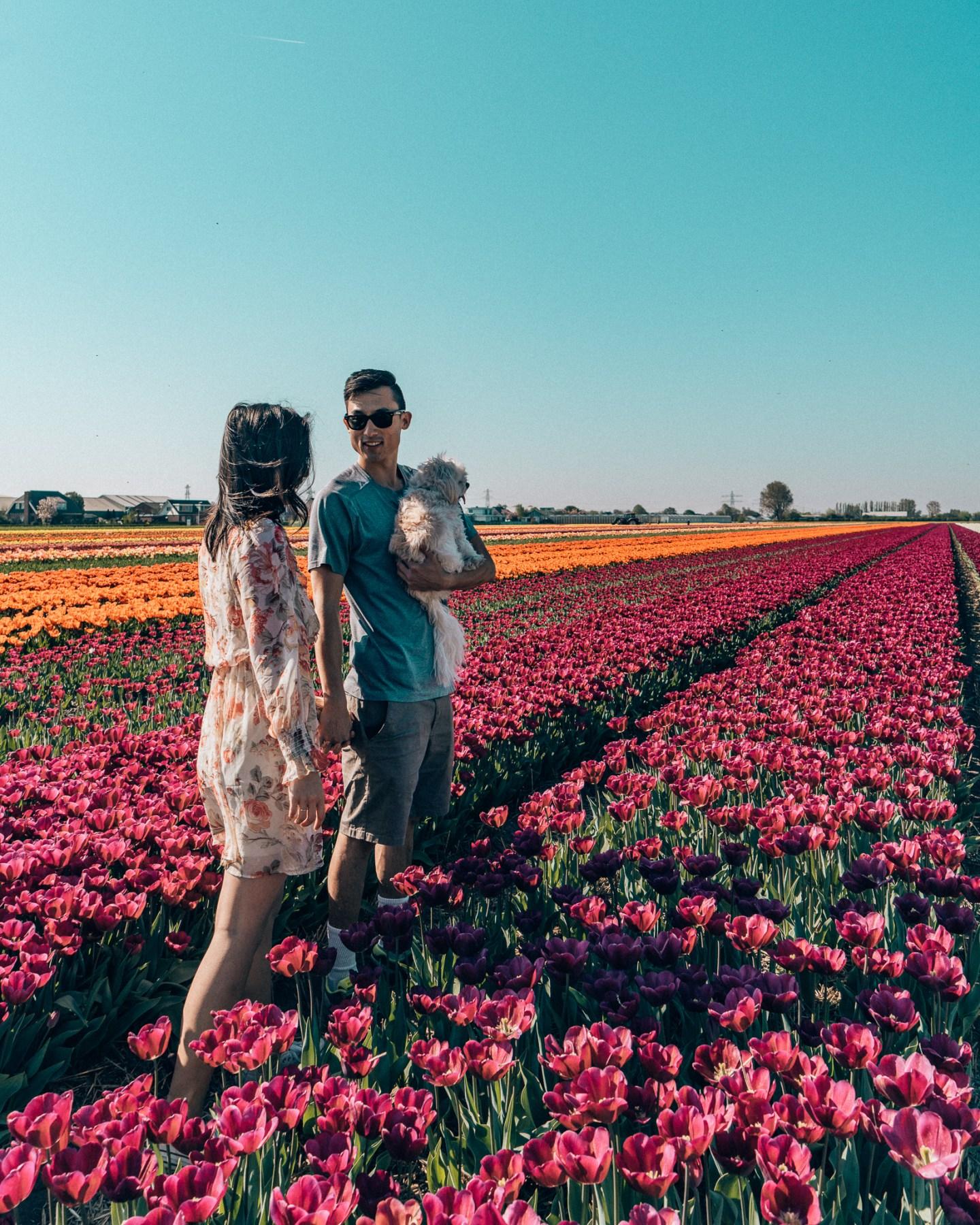 Family Tulip fields