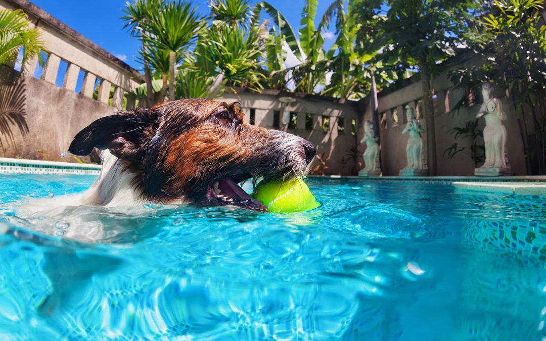 Triple Digit Heat Tips for Your Dogs