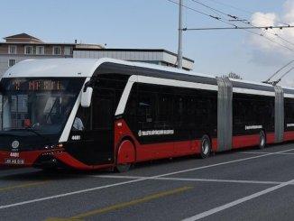 native trambus