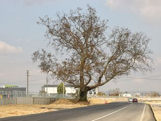 dubbele weg guzergahi veranderd voor boom
