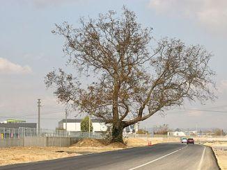 двоен път guzergahi променен за дърво