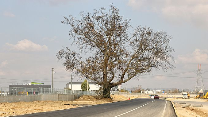 double way guzergahi changed for tree