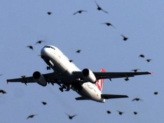 THY Plane Striking the Flock of Birds Back to Istanbul Airport