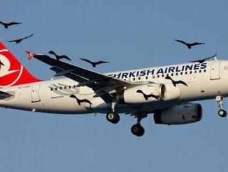 حاجز الطيور والرياح إلى مطار اسطنبول