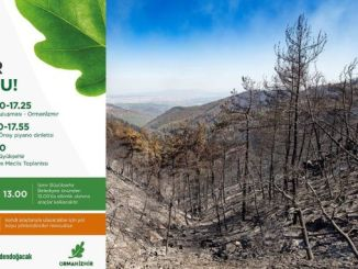 preparativos para a reunión forestal
