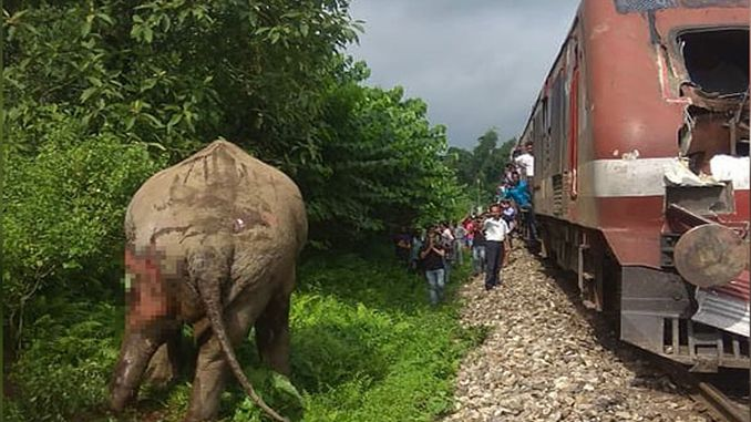 The Elephant Hitting the Train in India