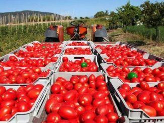 thị trường nông nghiệp kỹ thuật số sẽ khuyến khích tất cả mọi người sản xuất