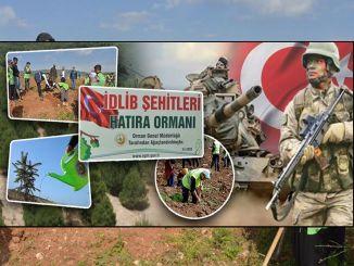 idlib sehts divenne una foresta di souvenir nell'area boscosa da occupare a Mersin.