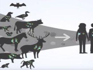 Virusjäger erstellen die Viruskarte der Welt