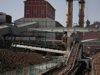 kalkun sukker fabrikker vil gøre kontinuerlig isci lærde