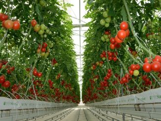 TL podpora kmetom, ki se ukvarjajo z biološkim in biotehničnim bojem v zeliščni pridelavi