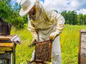 Grant Support for Beekeeping, Silkworm, Goose and Turkey Farming from the Ministry