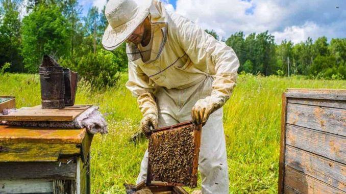 Berikan Dukungan untuk Peternakan Lebah, Ulat Sutra, Angsa dan Kalkun dari Kementerian