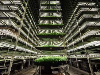 The goal is to establish a million square meters of agriculture factory