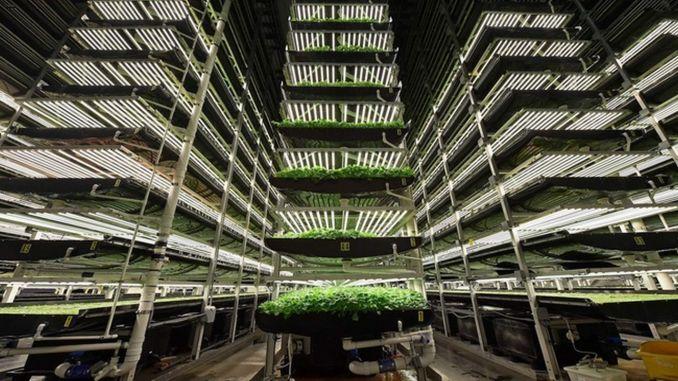الهدف هو إنشاء مصنع زراعي على مساحة مليون متر مربع
