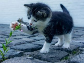 love cat for your health