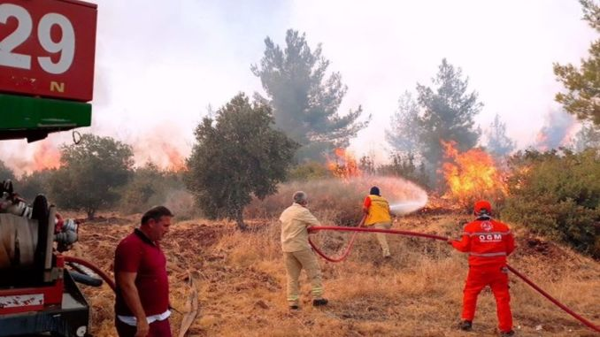 Hatay forest fires became a documentary