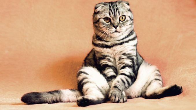貓應該接種什麼疫苗?