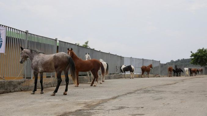 The responsibility of the horses owned by the ibb free transfer