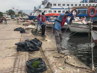 Der Seesalat in İzmir Korfez wird gereinigt