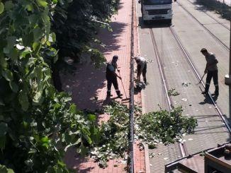 Grene, der kan beskadige Akcaray-sporvognslinjen, er blevet trimmet