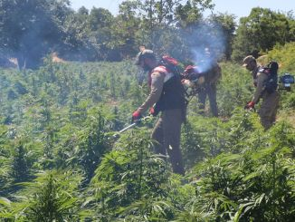 Millionen Cola-Cannabis in Diyarbakir beschlagnahmt