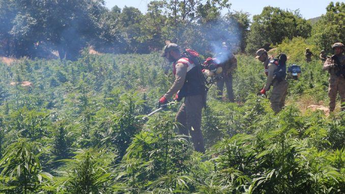 million coke cannabis seized in Diyarbakir