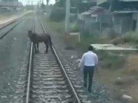makinist treni durdurdu inip ray uzerindeki ati kenara cekti