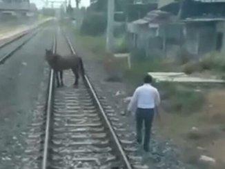 o maquinista parava o trem, ele descia e puxava o cavalo na amurada para o lado