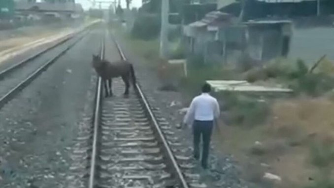 the driver stopped the train, he would get off and pull the horse on the rail to the side