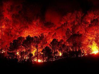 Що робити при лісових пожежах