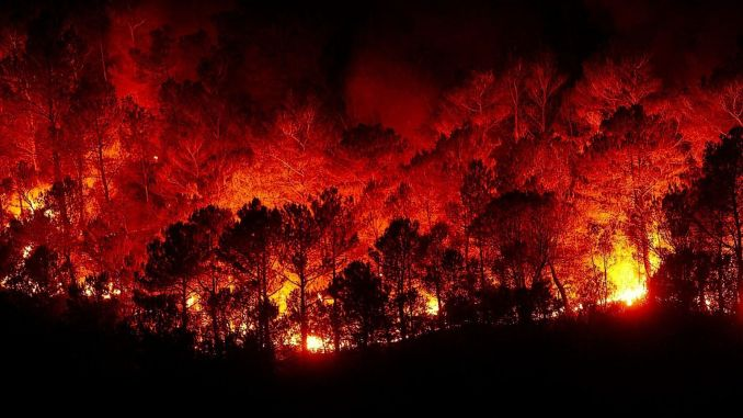Things to Do in Forest Fires
