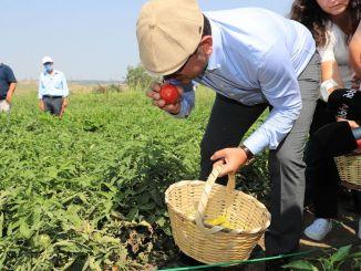 imamoglu надів шапку і разом із фермерами зробив перший в цьому році урожай