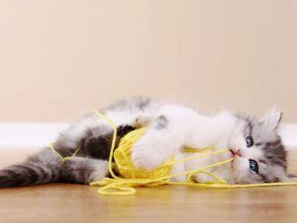 ξένα σώματα που καταπιούνται από γάτες και σκύλους μπορούν να θέσουν σε κίνδυνο τη ζωή τους