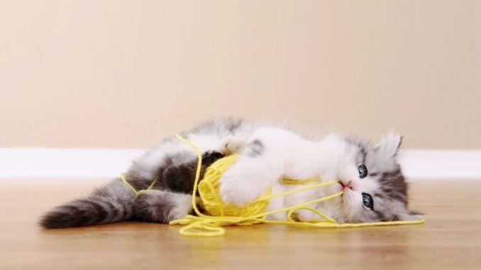 Fremdkörper, die von Katzen und Hunden verschluckt werden, können ihr Leben gefährden