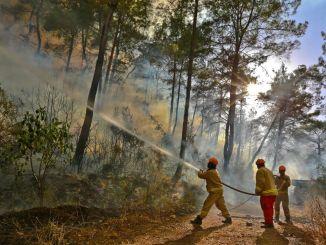 حذرت المديرية العامة للغابات من حرائق الغابات