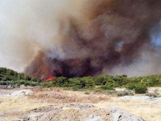 izmir buyuksehir inicia la movilización forestal para una cubierta verde resistente al fuego