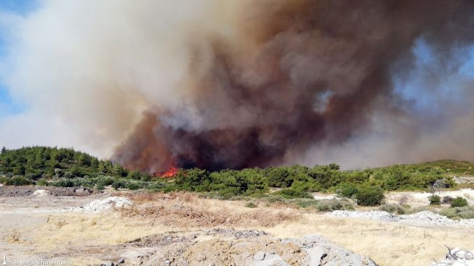 izmir buyuksehir starts forest mobilization for fire resistant green cover